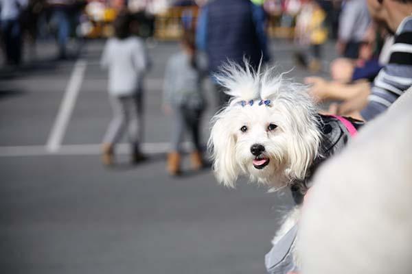 I Festival Mascotes de Llíria